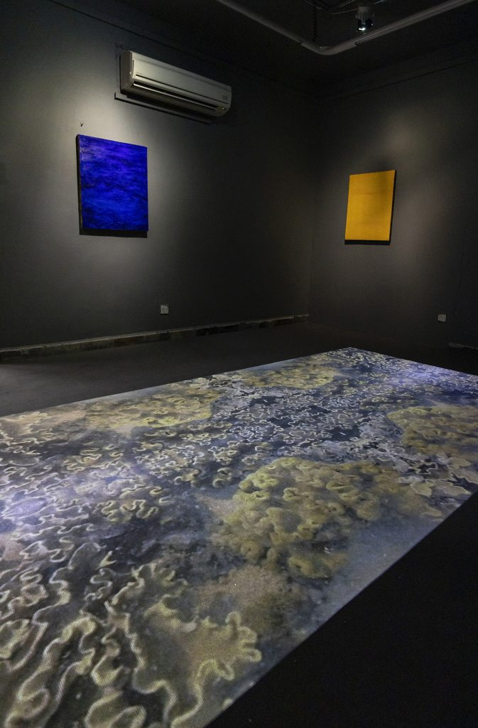 Installation View: Dreaming of Cyrene; Sea Hibiscus; and The Sea Around Us